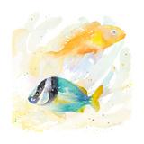 Tropical Fish Square II