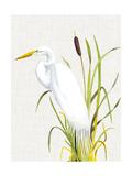 Waterbirds & Cattails IV