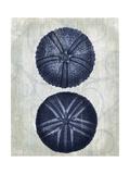 Indigo Blue Sea Urchins a Reproduction d'art par Fab Funky