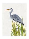 Waterbirds & Cattails II Reproduction d'art par Naomi McCavitt