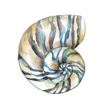 Aquarelle Shells II Reproduction d'art par Chariklia Zarris