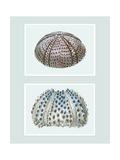 Sea Urchin Print on 2 Panels Reproduction d'art par Fab Funky