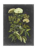 Bookplate Floral I Reproduction d'art par Naomi McCavitt
