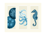 Three Panel Print Sea Urchin Starfish and Seahorse in Blue