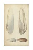 Marine Mollusk II Reproduction d'art par Wood