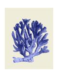 Blue Corals a