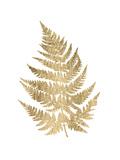 Graphic Gold Fern IV