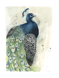 Watercolor Peacock Portrait I