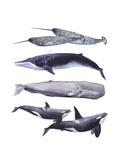 Whale Stack II Reproduction d'art par Grace Popp