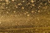 Locust Plague (Locusta Migratoria Capito) Threatens Crops in South Madagascar  June 2010
