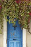 Blue Doorway with Grape Vines (Vitis) Puyloubier  Var  Provence  France  October 2012