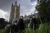 Feral Pigeons (Columba Livia) Outside the Houses of Parliament in Westminster London  UK