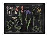 Botanical Floral Chart II Black and White