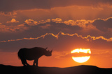 Africa  Kenya  Masai Mara Game Reserve Composite of White Rhino Silhouette and Sunset