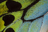 Close-Up Detail Wing Pattern of Tropical Butterfly