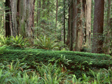 California  Prairie Creek Redwoods State Park
