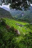 Batad Rice Terraces  Banaue  Luzon  Philippines