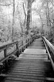 USA  Florida  Fakahatchee Strand Preserve State Park  Big Bend Board Walk Infrared