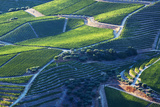 Portugal  Douro Valley  Terraced Vineyards Lining the Hills