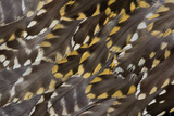 Golden Plover Feather Pattern