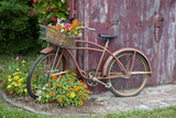 Old Bicycle with Flower Basket Next to Old Outhouse Garden Shed Marion County  Illinois
