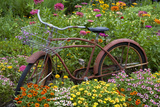 Old Bicycle with Flower Basket in Garden with Zinnias  Marion County  Illinois