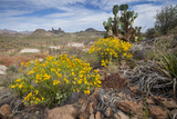 Mule Ears Formation and Wildflowers in Big Bend National Park
