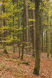 Germany  Baden-Wurttemburg  Black Forest  Rote Lache  the Black Forest  Fall