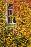 Germany  Hesse  Wetzlar  Building Covered with Ivy in Autumn