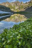 USA  Colorado  San Juan Mountains Clear Lake Reflection and Marigolds