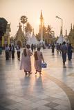 Buddhist Nuns in Pink Robes at Sunrise at Shwedagon Pagoda (Golden Pagoda)  Myanmar (Burma)