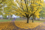 Autumn Colours in Leazes Park  Newcastle Upon Tyne  Tyne and Wear  England  United Kingdom  Europe
