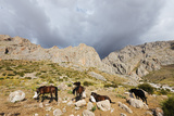 Ala Daglar National Park  Cappadocia  Anatolia  Turkey  Asia Minor  Eurasia