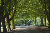 A Tree-Lined Avenue in Clifton  Bristol  England  United Kingdom  Europe