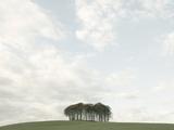 Copse of Trees Near Okehampton  Devon  England  United Kingdom  Europe