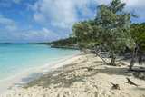 Iguanas on a White Sand Beach  Exumas  Bahamas  West Indies  Caribbean  Central America