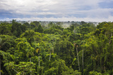 Amazon Rainforest at Sacha Lodge  Coca  Ecuador  South America