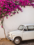 Fiat under Tree in Mojacar  Andalucia  Spain  Europe