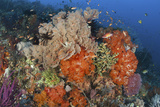 Bright Sponges  Soft Corals and Crinoids in a Colorful Komodo Seascape