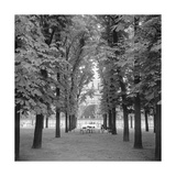 Jardin Luxembourg  Paris Trees  Chairs