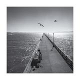 Berkeley Pier Birds