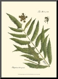 Small Antique Fern II