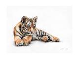 Tiger Cub Colour Pencil Drawing Reproduction d'art par Sarah Stribbling