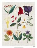 Floral Assemblage IV