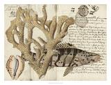 Sealife Journal II