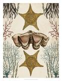 Antiquarian Menagerie - Starfish