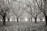 Tree Grove Pano BW I