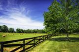Green Springs Farm I