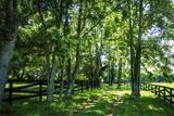 Green Springs Farm III