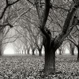 Tree Grove BW Sq I